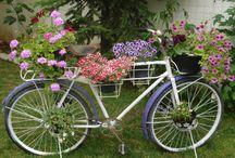 Bicicletas Floridas