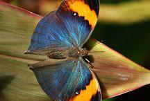 Butterfly ♥.♥