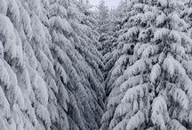 Forest / Woodlands