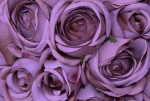 Radient Orchid - 2014 color of the year / Pantone Color of the year for 2014.