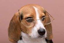 Perros / Información sobre perros, razas caninas, salud y más...