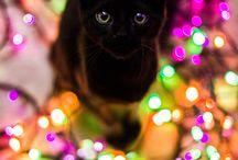Crăciun cu pisicuțe