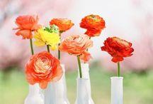 Blush Color Wedding Ideas