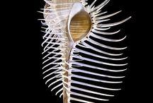 shells shell seashells