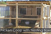 Chicken Coop Building Steps - All-season chicken coops / Step by step instructions to build a four seasons chicken coop.
