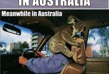 Memewhile in Australia
