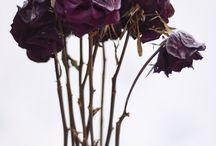 Maleficent//CH