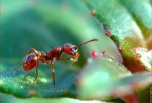 ENJOY! Ants