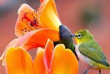 Birds / Volatili