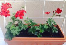 Garden Delights... / Gardening