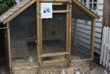 kaniner i kogne