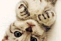 Cute / Denne fant jeg via:katter
