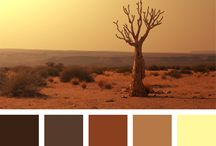 Paleta de colores Star Wars