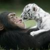 Animals = Love / by MyPerfectGift .com