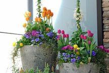 tavasz & virág
