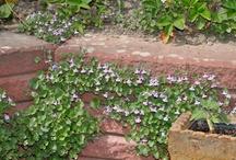 Växter i vår trädgård