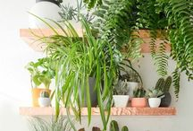 Indoor plant wall