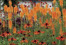 Kleuren tuin