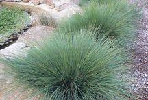 Australian Plants that I like