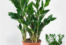 Zimmerpflanzen & Pflege