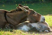 Donkeys / Cute