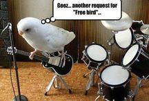 Bird Humour