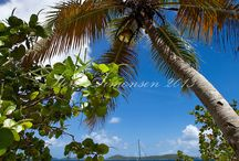 Carribean / by Lana Gillespie
