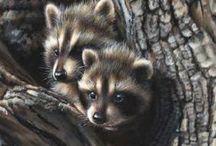 Vintage raccoons
