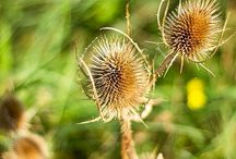 Wildflowers / Wildflowers fotografie....