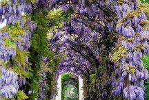 flori și arbori decorativi