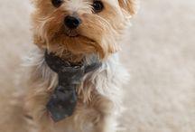 Pets! / by Sara Fitzgerald