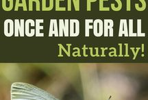 ▪️ Gardening Ideas / Gardening for beginners and garden pros alike. Tips and ideas on how to work with nature, utilize permaculture, and grow a healthier garden year after year