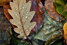 ESTAÇÕES DO ANO.. / As quatro Estações do Ano...  Verão, Outono, Primavera e Inverno.