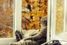 Nos chats préférés - Our favorite cat pictures