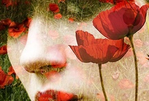 Poppies - Poppy painting