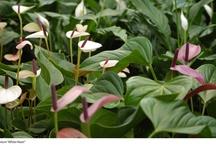 #Plantas Int. #Verdes