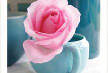 Pink & Blue༺♥༻