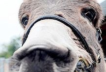 Amazing Donkeys