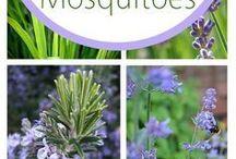 Planter mot Innsekter, mygg osv