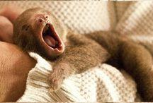 Sloths!!!