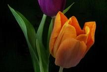 Flowers / by Debra Trautman