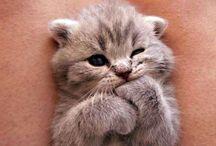 chatont et chat mignon