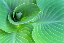 Ferns and Hostas / by Sharon Gervais
