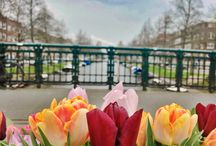Amsterdam flower discoveries
