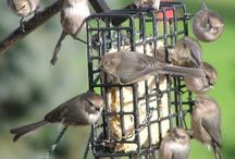 ATTRACTING GARDEN BIRDS