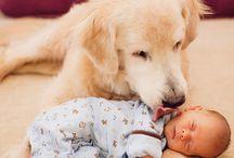 Love Dogs *