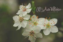 Mis fotografías / El placer de fotografiar consiste en aprender a ver, esperar lo inesperado y mostrar nuestro estilo personal.