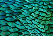 Peacock Inspired Things I Like