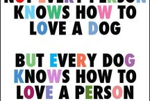 DOGS ARE AMAZING / by Kelli Henrich
