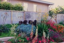 Drought Tolerant Landscapes / Here are some ideas on drought tolerant landscapes since we are experiencing water shortages in the Sacramento Region.